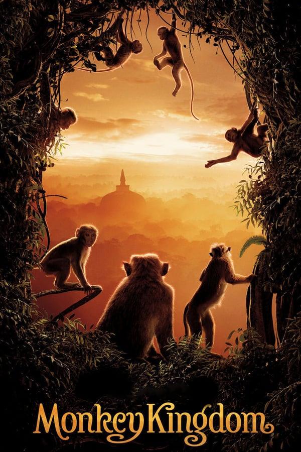 მაიმუნების სამეფო / Monkey Kingdom