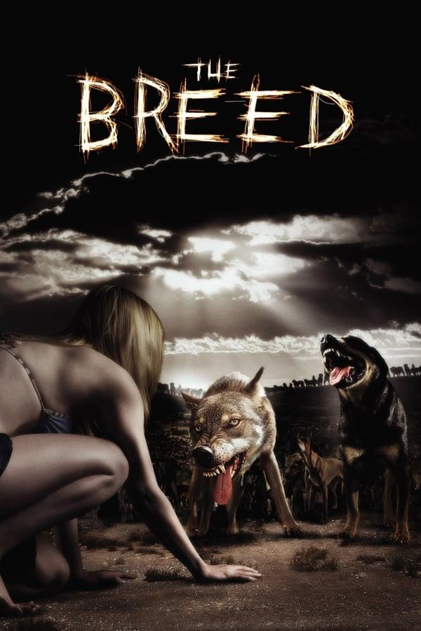 ხროვა / The Breed
