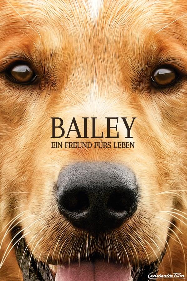 ძაღლური ცხოვრება / A Dog's Purpose